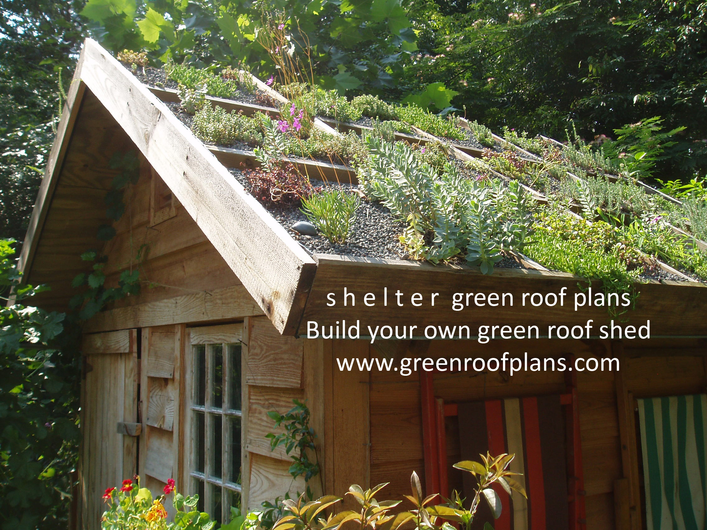 basic container design – green roof | r | one studio architecture